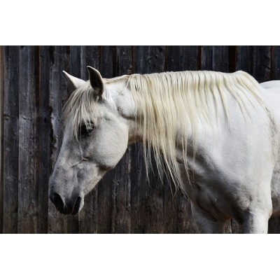 Le coin du cheval