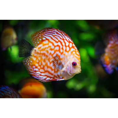 Le coin du poisson